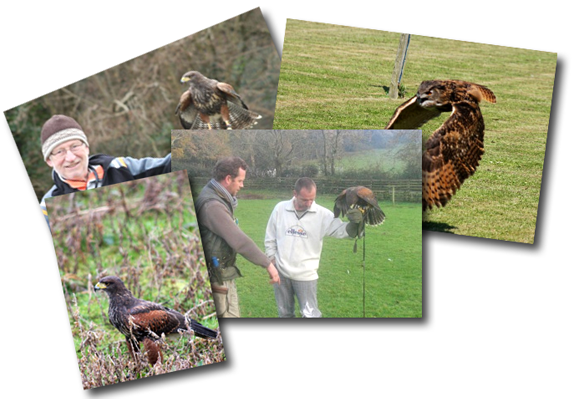 Welsh Hawking Centre Course Collage