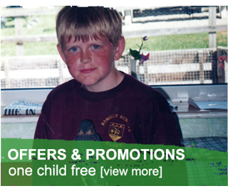 offers and promotions at the Welsh Hawking Centre