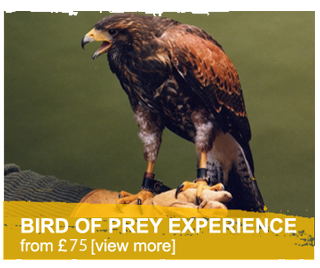 bird of prey experience Welsh Hawking Centre