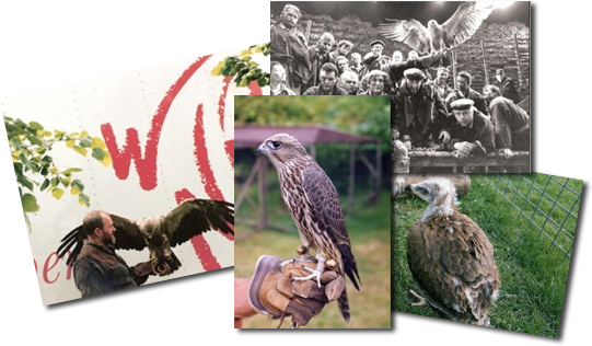 Welsh Hawking Centre Collage